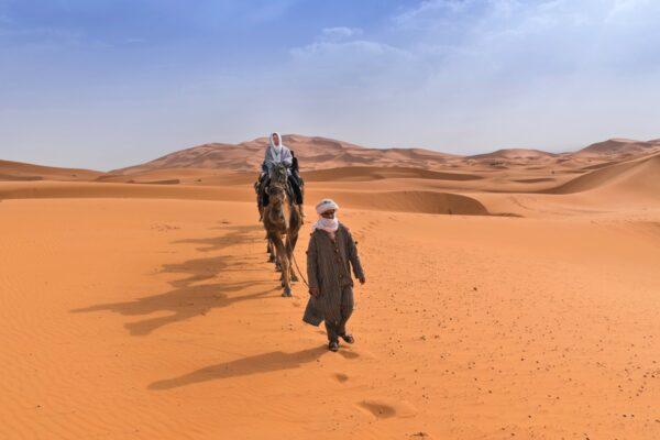 Dromadaire dans le désert au Maroc