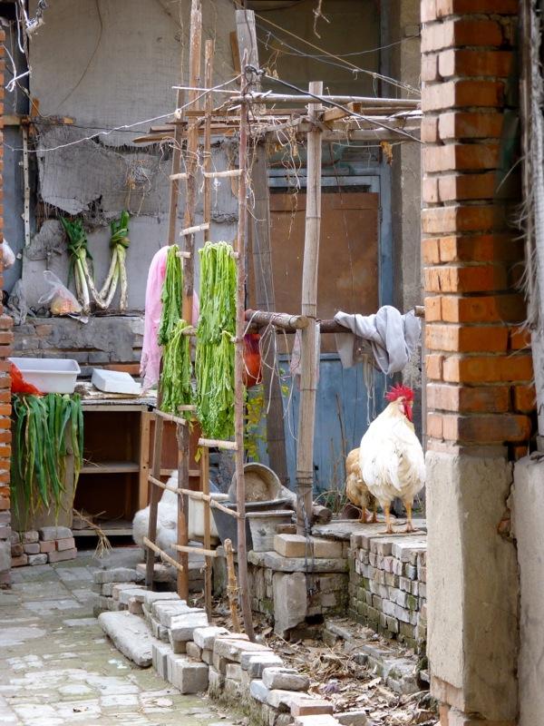 Plein centre de Pékin dans les hutong