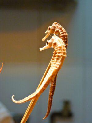 Hippocampes à Pékin (marché de Donghuamen)