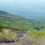 Arbres sur le Mont Fuji