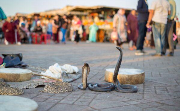 Boycott de Marrakech
