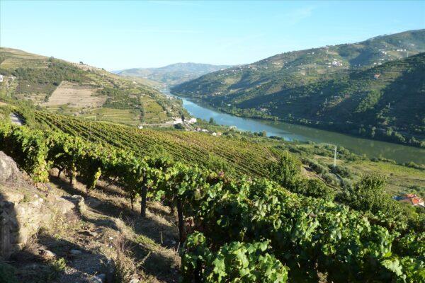vignes vallée du douro