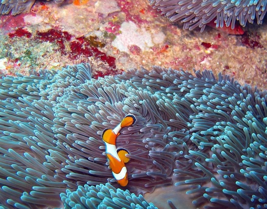 poisson snorkeling koh similan