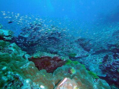 snorkeling iles similan thailande
