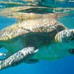 tortue iles similan thailande