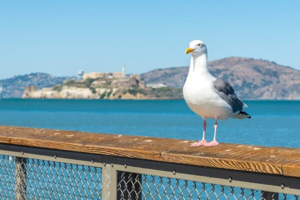 Réservations à faire pour San Francisco