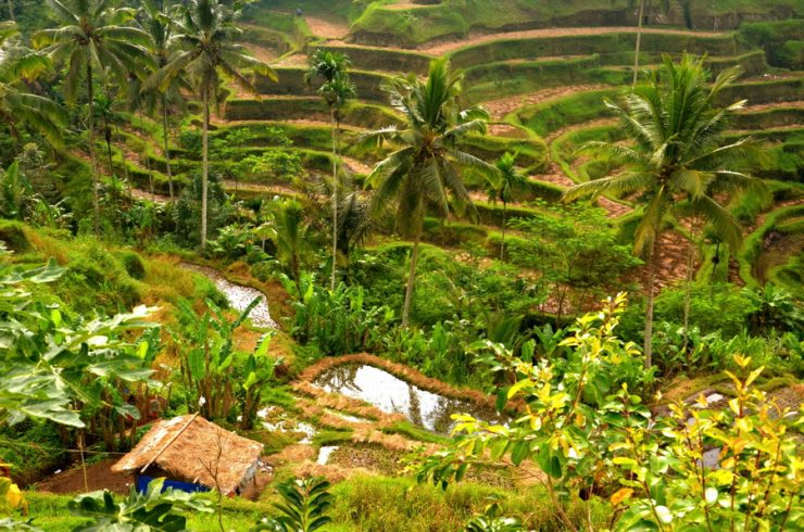 Tegalalang à Bali