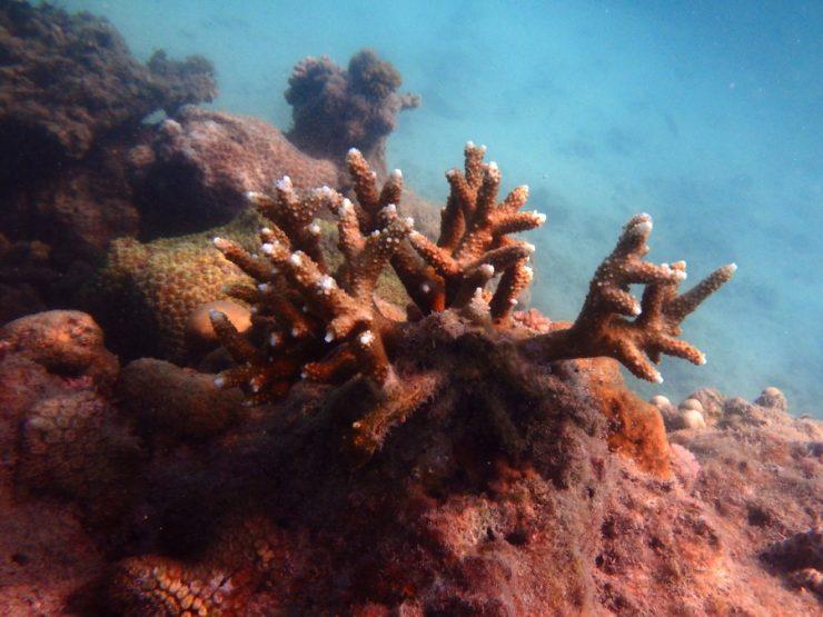 Coraux aux îles Perhentian