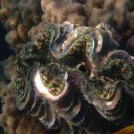 Coraux aux Perhentian Islands