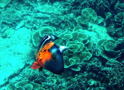 Snorkeling & poisson