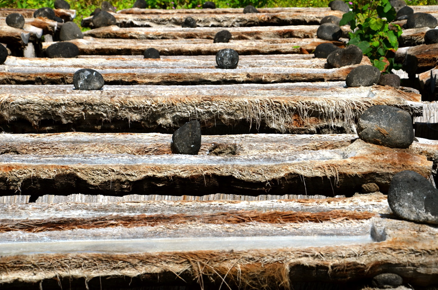 Séchage dans les troncs de cocotiers