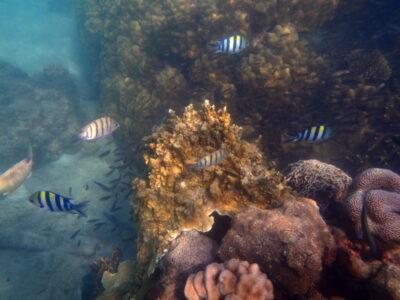 Snorkeling aux îles Perhentian
