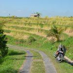 Balade dans les rizières de Jatiluwih