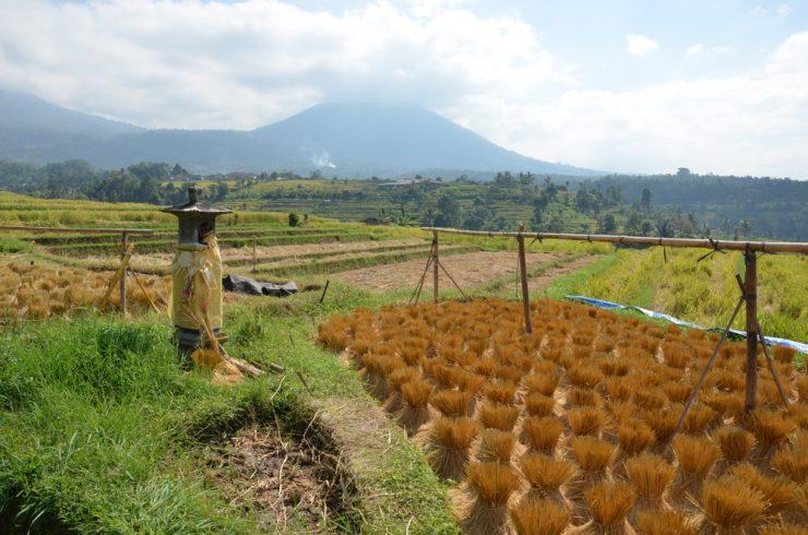 Jatiluwih (Bali)