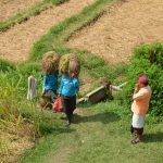 Récolte du riz à Jatiluwih