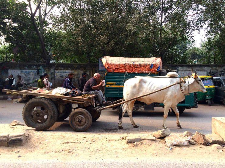 Vache - Old Delhi