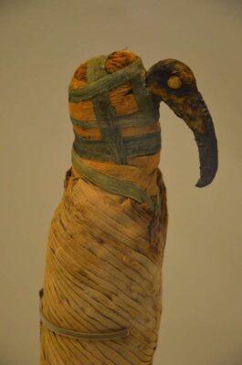 Momie d'Ibis - Expo Des animaux et des pharaons