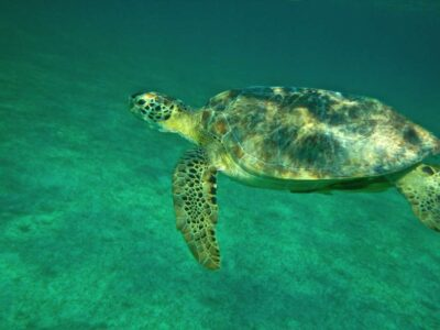 Snorkeling avec les tortues au Mexique