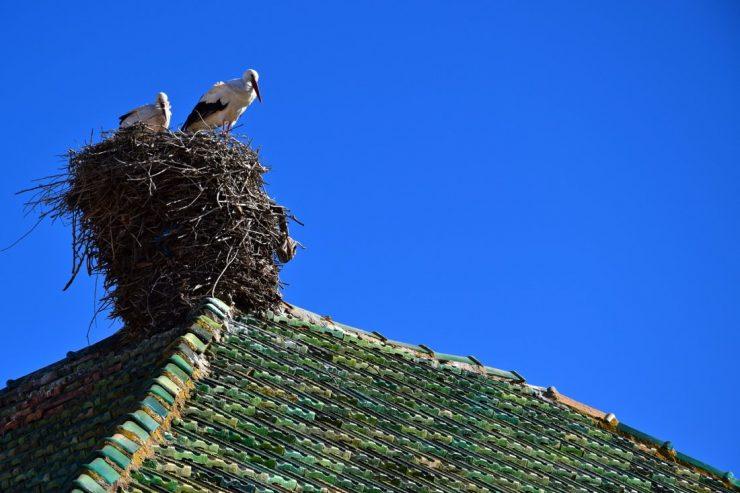 Cigognes sur un toit du Moyen Atlas