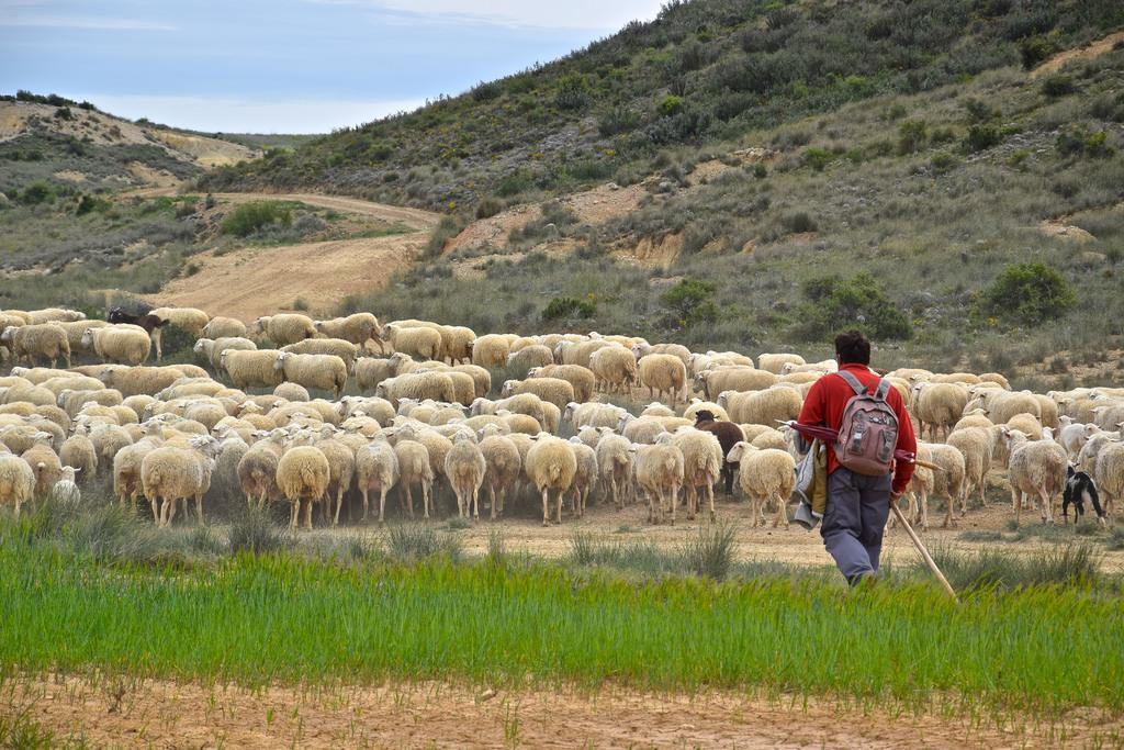 Berger et son troupeau dans les Bardenas Reales