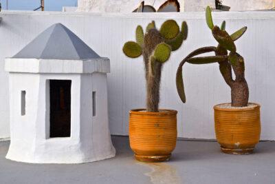 Cactus sur la terrasse du riad Azahra