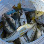 Fruit de la pêche à Campeche