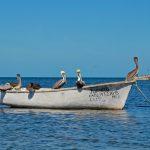 Pélicans à Campeche
