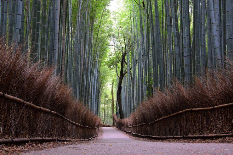 Bamboo grove - Arashiyama, Kyoto