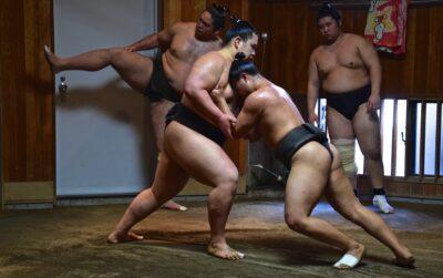 Assister à un entraînement de sumo
