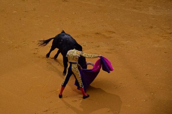 Corrida à Saragosse