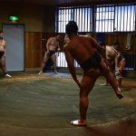 Training session - Sumo