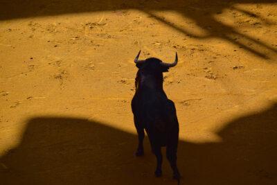 taureau-dans-l-arene