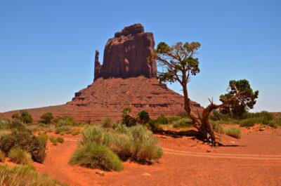 Arbre à Monument Valley