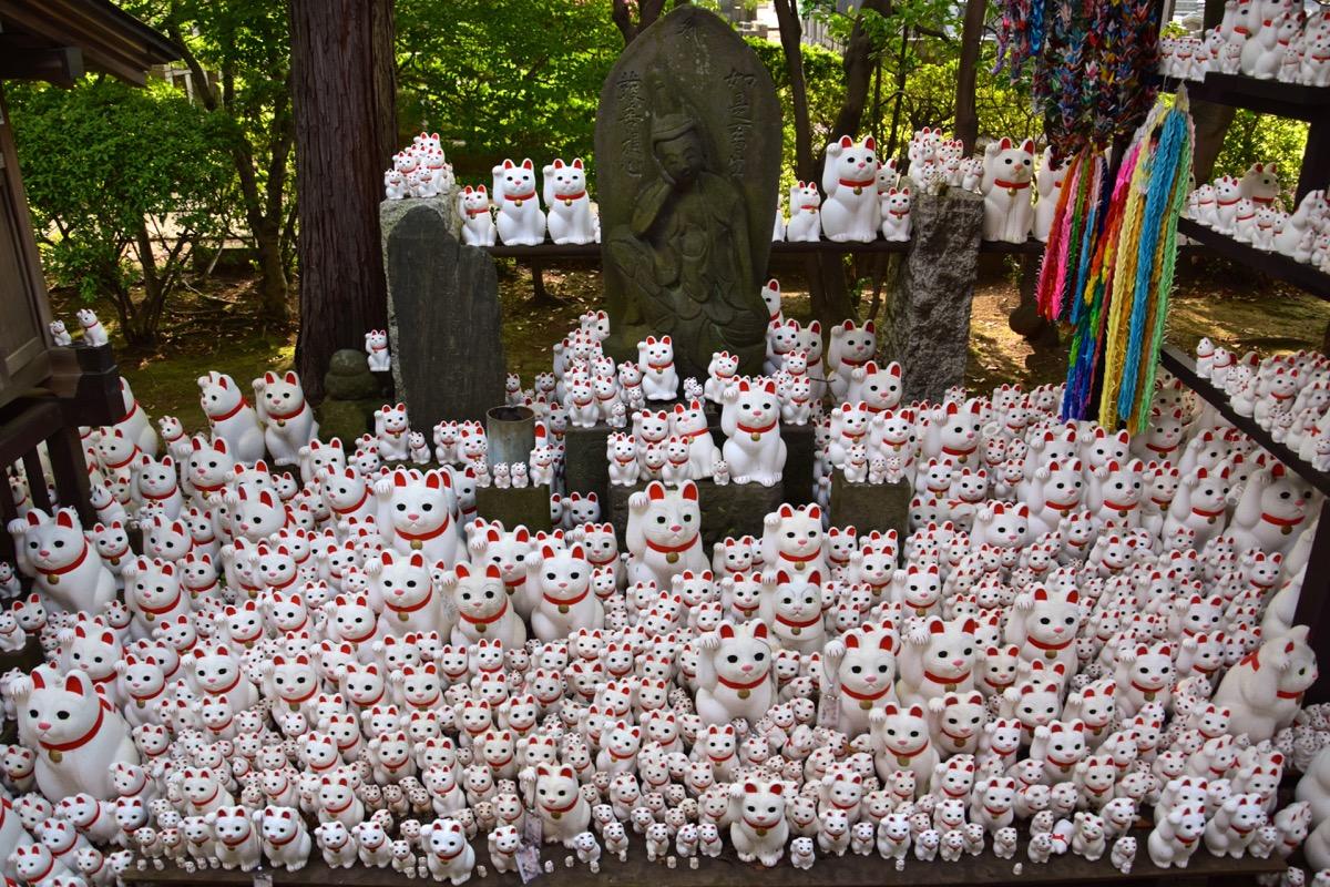 Gotoku-ji, temple du maneki-neko