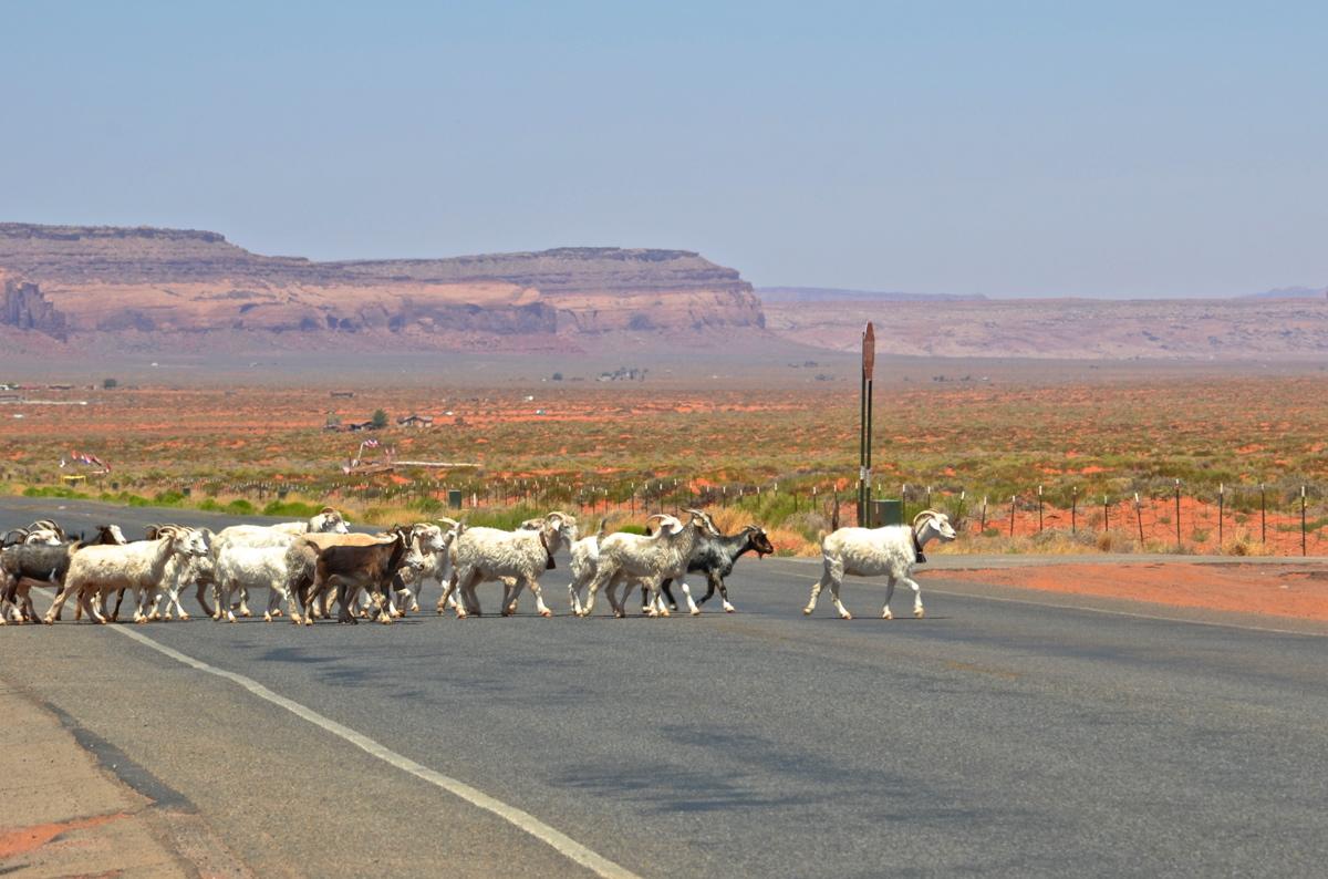 Moutons sur la route menant à Monument Valley