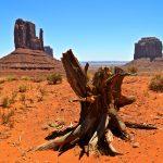 Souche d'arbre à Monument Valley