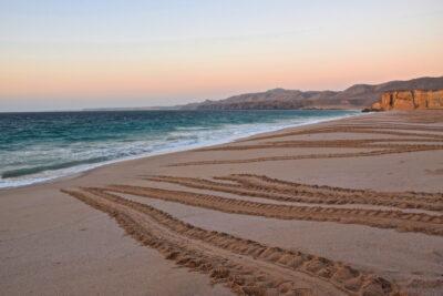 Traces de tortues sur la plage de Ras al Jinz