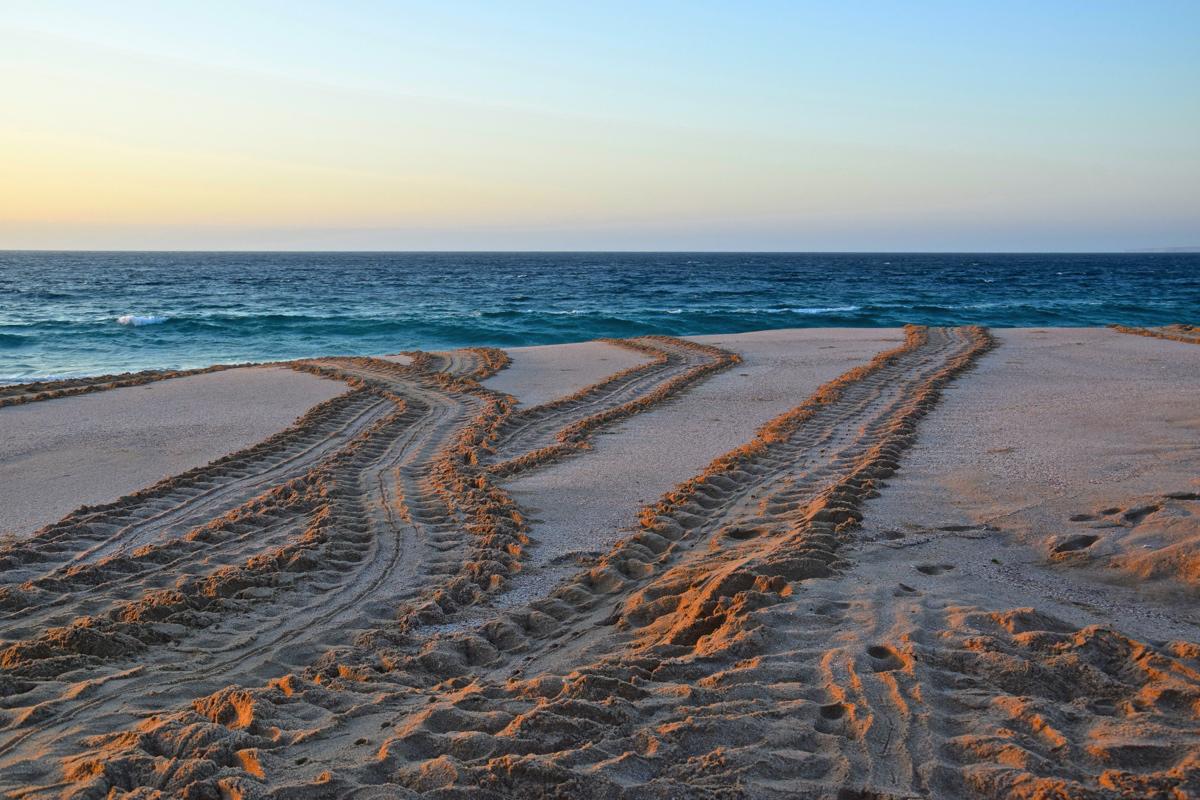 Turtles tracks - Ras al Jinz, Oman