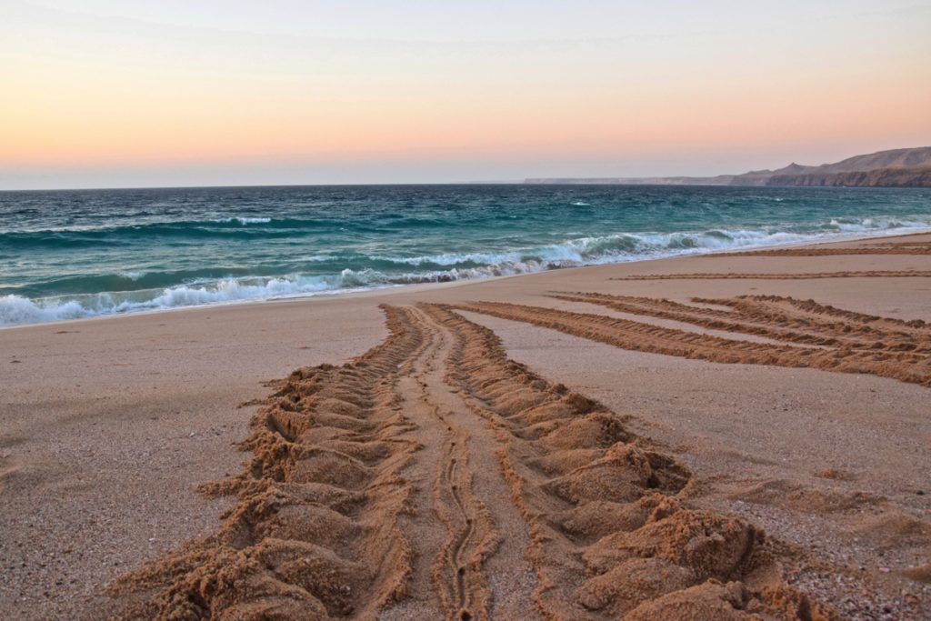 Turtles tracks - Ras al Jinz, Oman