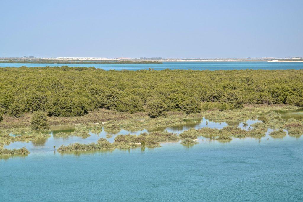Mangrove d'Abu Dhabi