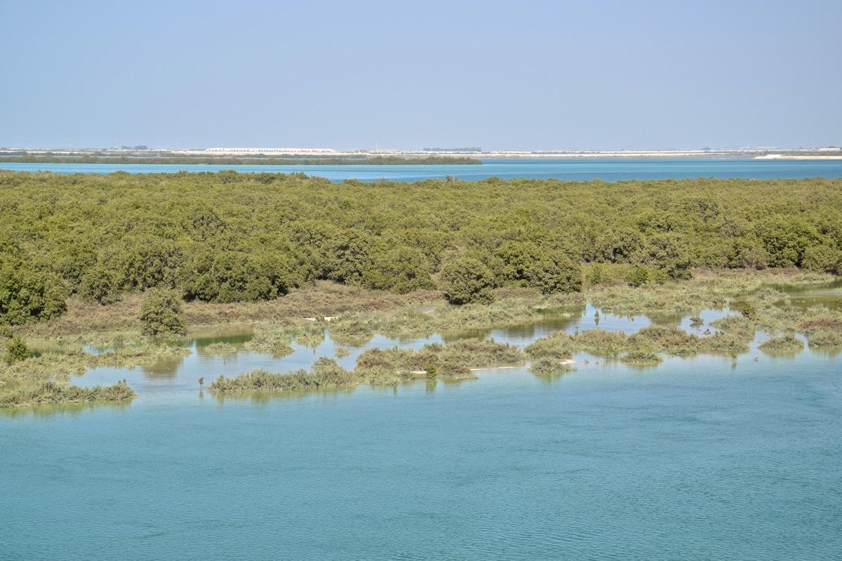 Mangrove d'Abou Dhabi