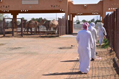 Marché aux dromadaires d'Al Aïn