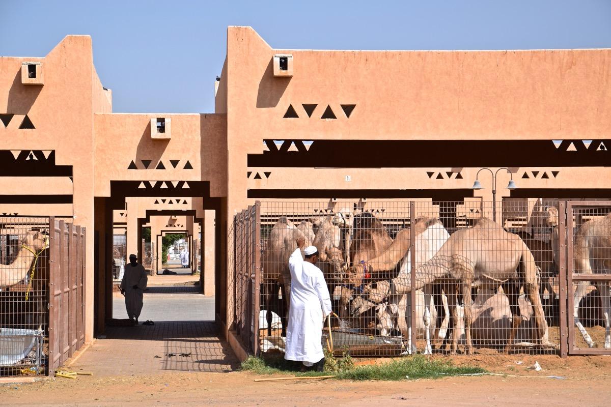 Souq aux dromadaires d'Al Aïn