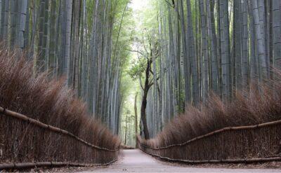 Bamboo grove à Arashiyama