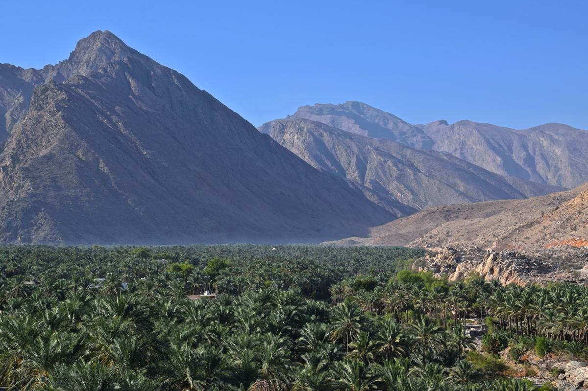 Panorama sur la palmeraie et les monts Hajar