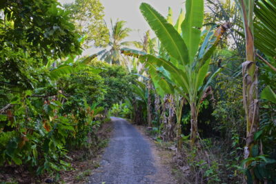 Balade sur un chemin de l'île de la Licorne