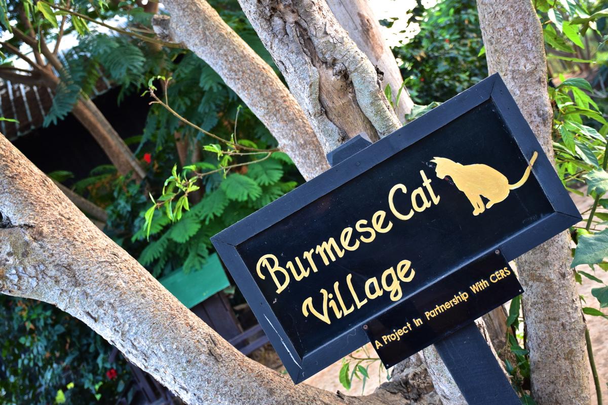 Burmese Cat Village
