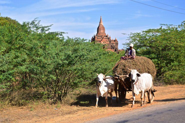 Farmer in Old Bagan