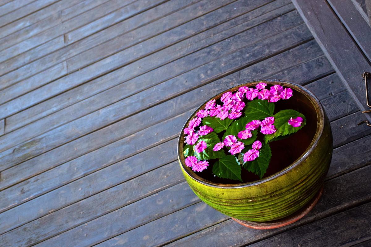 Fleurs au Thahara Inle Heritage
