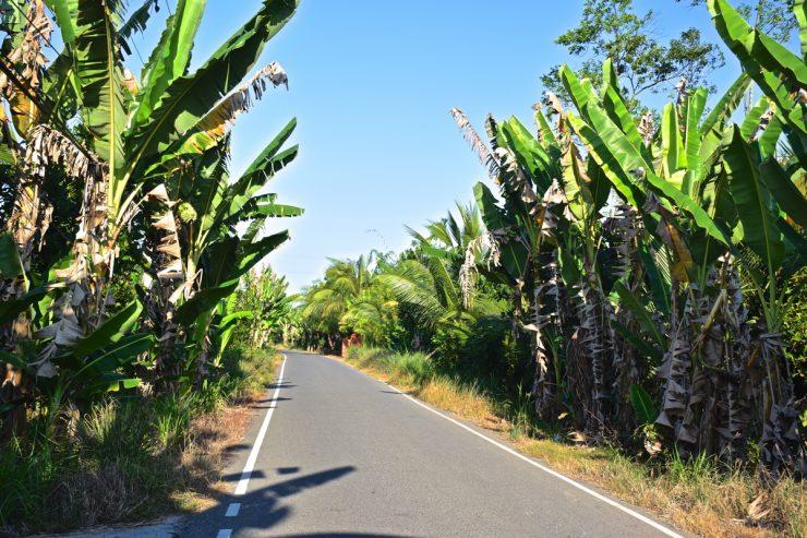 Une route sur Thoi Son, l'île de la Licorne